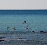 Birds over blue seas....
