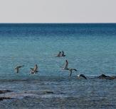 Birds over blue seas....