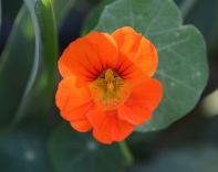 Shades of orange...