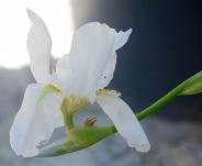 Iris and snail....
