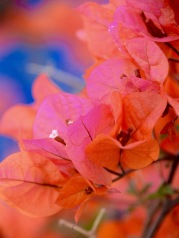 Shades of orange, pink and blue....