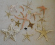 Spindly orange from Sri Lanka, 6 points from Vietnam, 4 points from Oman, the others from the UAE coastline...