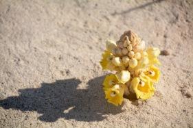 Beach orchid...