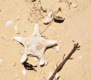 Sun-dried amongst the flotsam on the shore line, Sri Lanka...