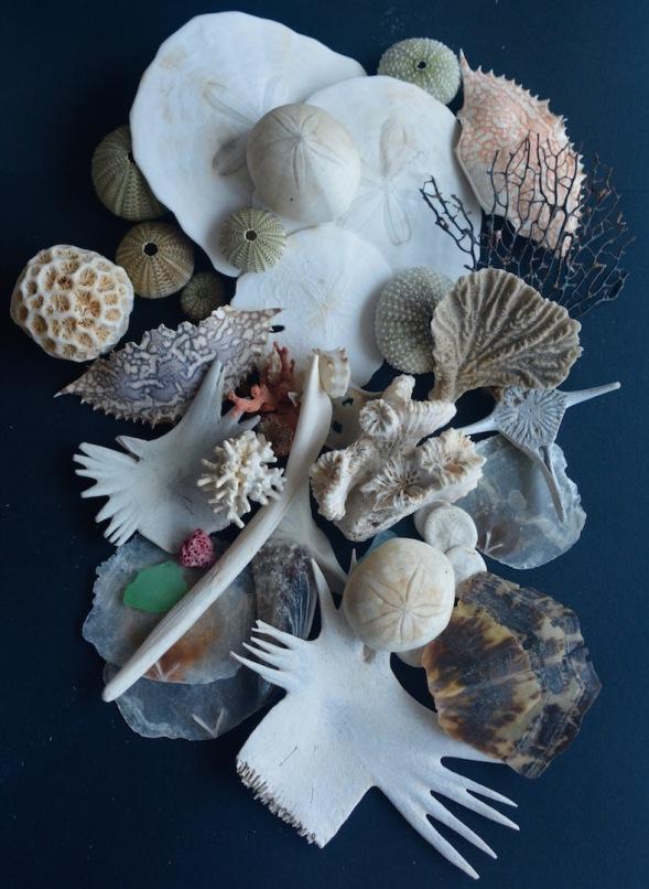 Beach treasures...