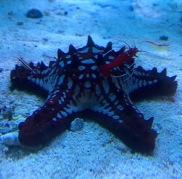 Seen in a Dubai aquarium shop,,,