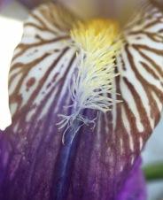 Close up to my Iris...