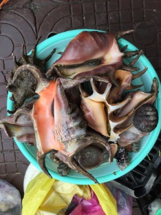 Lambis for food sale , fish market Con Dao island, Vietnam...