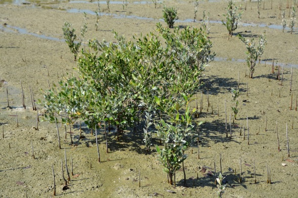 Mangrove wetlands occur frequently around the coastline, mostly protected as wetland reserves....
