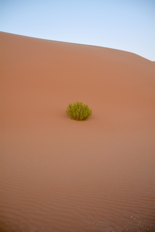 So its a welcome sight to see a splash of green perched up a dune... makes you wonder though...