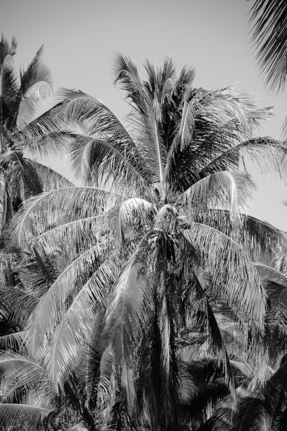 Palm trees show such a texture in B&W....