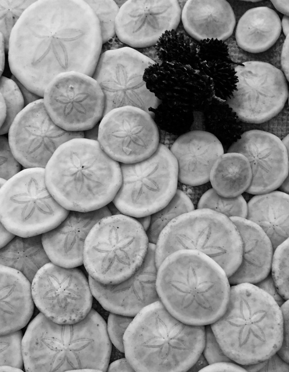 Texture is more defined in black and white...these sand dollars, in the original shot don't show the beatiful flower shape in the centre.... being an echinodermophile, black and white is perfect to portray the sand dollar structure...