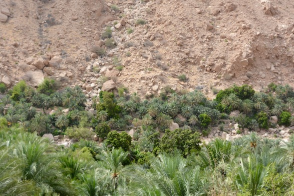 Starting to climb, looking down on the date palms... feel it's going to be steep from now on...