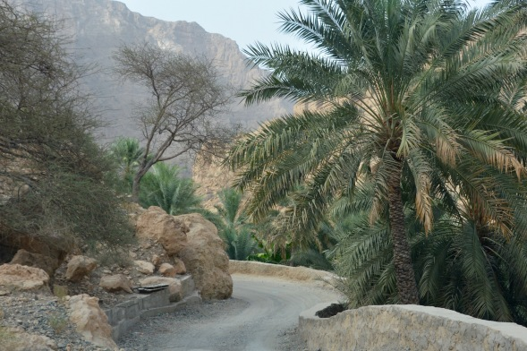 Date palms next to a VERY narrow road, good reversing skills necessary up here....