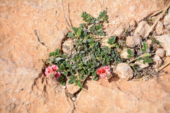 The finishing touch provided by some little pink flowers, growing through the rock outside the pink house.....