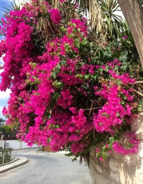 Down the hill, past my neighbour's glorious pink bougainvillea....