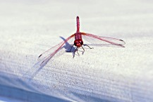 My dragonfly, came most days around 4pm...