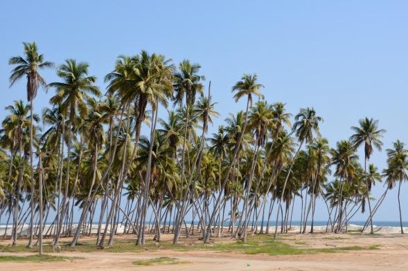 Dashing past Salalah beach...