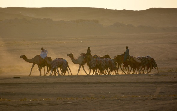 Taking the camels for a ride before sunset...