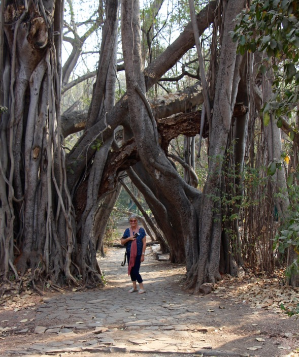 Yours truly, dwarfed by the Banyan tree..
