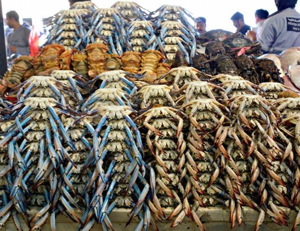 Orderly crab...