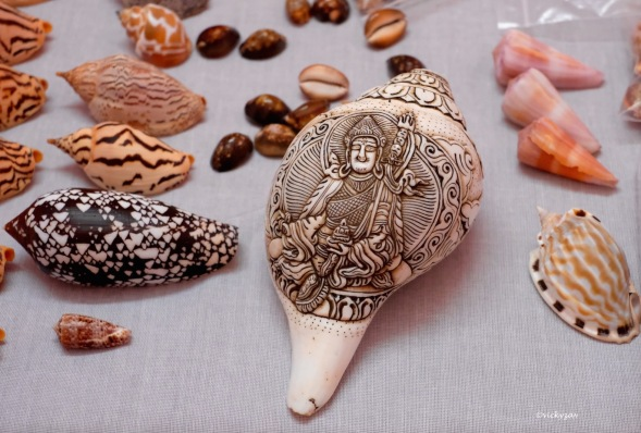 This is the traditional Indian Chank shell, Turbinella pyrum (Linnaeus, 1758). The shell has considerable significance in Hinduism and Buddhism. It is considered to be sacred and is one of the eight auspicious symbols. In these religious contexts, the shell is sometimes modified by having the tip of the spire cut off, so it can be blown as a ceremonial trumpet. Some shells used in this way are decorated with metal and semiprecious stones. This one was carved in Nepal but came home with me. My India shell treat!