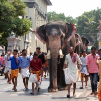 India,1/4/18 :Trivandrum arrival and elephants, in the first hour...
