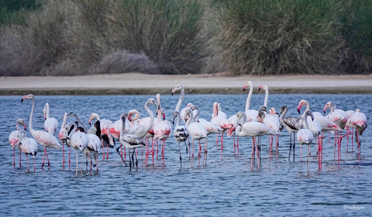 Al Qudra Lakes, Dubai...