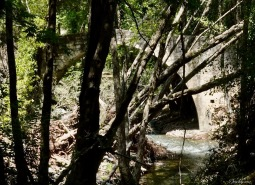 Roudias Venetian bridge in the forest..