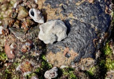 Modulus Tectum, I love this clunky cream shell...