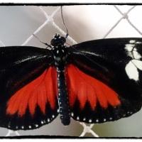 January 2020: Dubai Butterfly Garden...