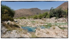 Down by the lower reaches of the Wadi, its a vibrant green and blue environment...